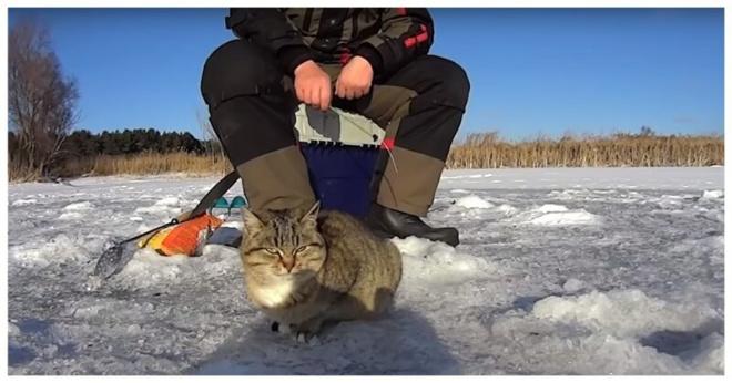 В Сызрани голодная кошка наткнулась на щедрого рыбака