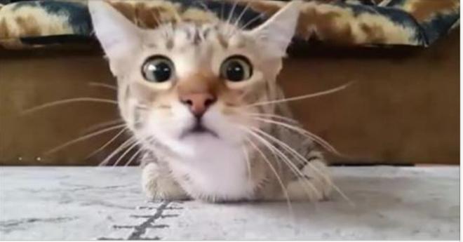 Кот, который смотрит фильм ужасов, стал звездой интернета.