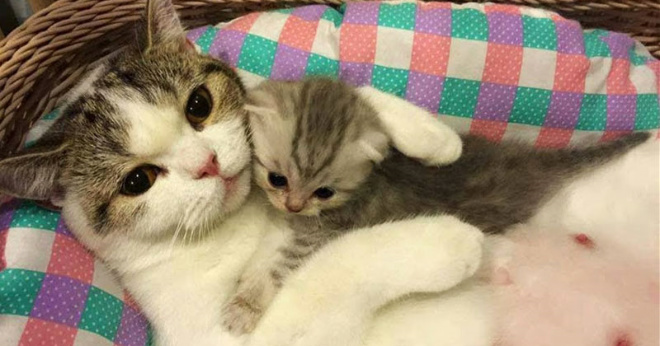 Кошка нежно ухаживает за своим котенком. До невозможности милое зрелище!
