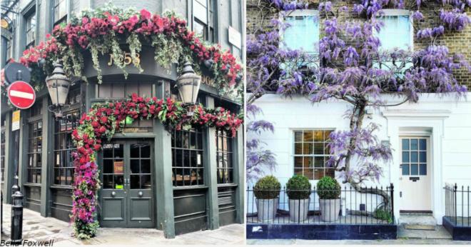 Женщина снимает самые красивые входные двери Лондона. И они как из сказки!