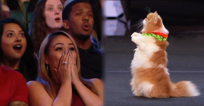 «Америка ищет таланты»: Украинки показали всему миру фантастический номер с дрессированными кошками