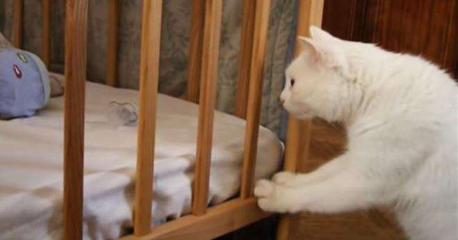Кот Миша впервые увидел младенца в доме. Его реакция – это что-то!