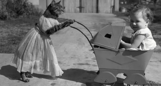 Смешные фотографии с участием животных, снятые более 100 лет назад