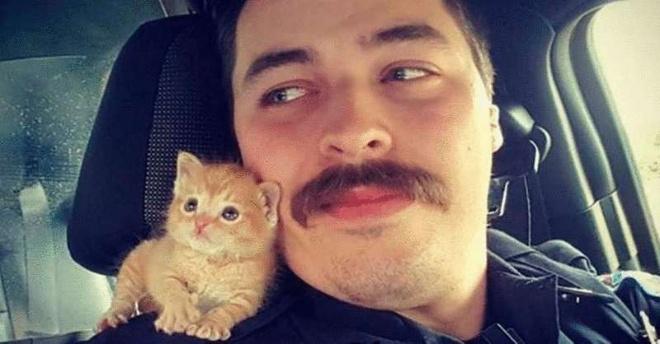 Рыжий котёнок Скирт вырос и командует своим папой-полицейским