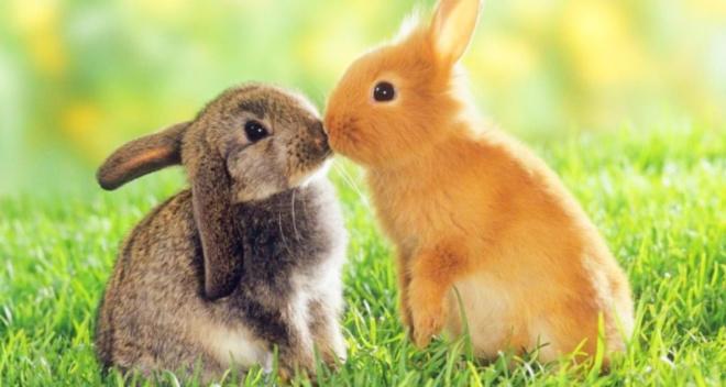 Они тоже умеют любить.Самые трогательные фотографии влюбленных животных