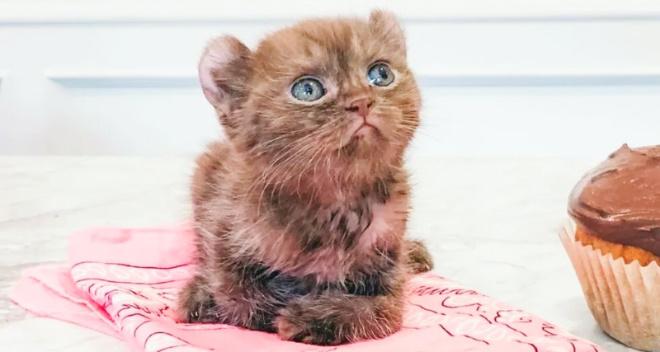 Котёнок с поврежденными лапками и медвежьими ушками попал в добрую семью и наконец-то счастлив!