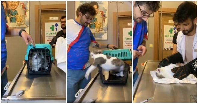 Кот, который терпеть не может ветеринарные клиники