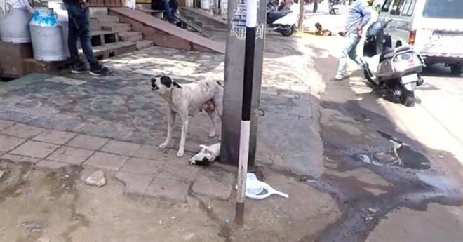 Бездомная собака отчаянно лаяла, призывая хоть кого-нибудь помочь ее щенку