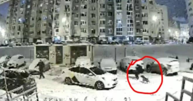 Таксист спас мальчика от бойцовской собаки, напавшей во дворе