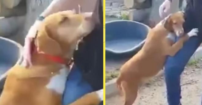 Спасённый пёс буквально вцепился в своего спасителя, пока мужчина не забрал его
