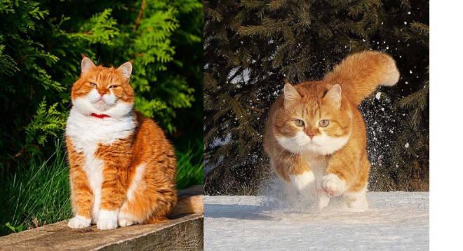 Уникальный случай, когда у красивейшего кота хозяин – фотограф-профи
