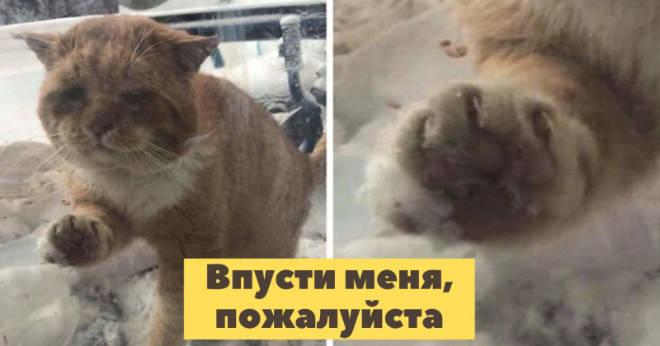 Замерзший хворающий котик постучался в окошко с просьбой спасти его