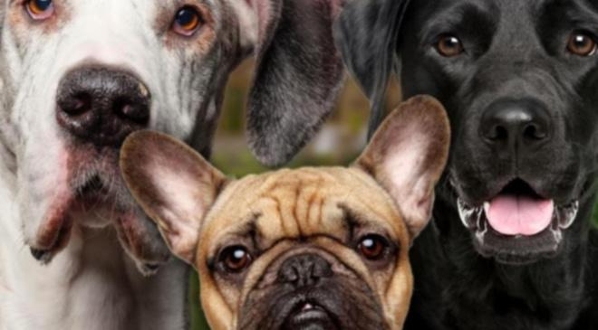 Что происходит с собаками, если сказать «Я тебя люблю»