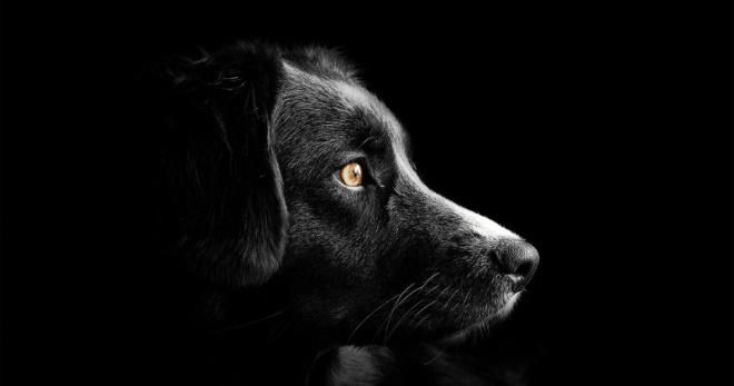 Житель Самары несколько раз изменил жене с собакой