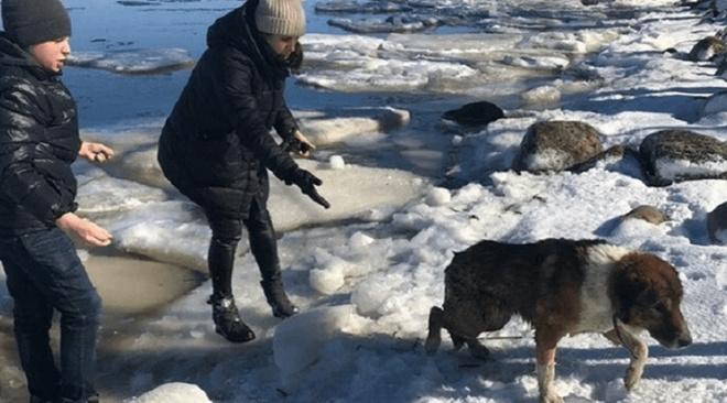 Отважный мальчик спас тонущего пса и нашёл его настоящих владельцев