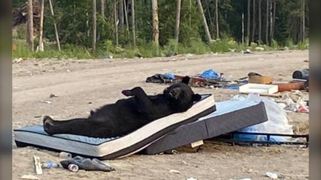 Медведь на свалке нашел отличный матрас и устроил себе на нем полный релакс